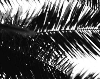 Black & White Palm Tree Photography, Sillouette of Palm Tree in Black and White, Monochrome, Tropical Palm Decor, Palm tree photography