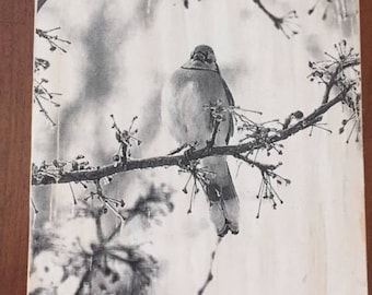 Birds, Bird Photography, Nature Photography, Wood Art, Blue Jay, Nature, Gifts