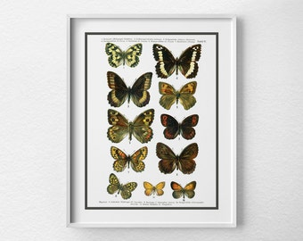 Butterfly Specimen Poster, Butterfly Poster, Scientific Insect Print, Butterflies Chart, Butterfly Art Print, Insect Art, Nature Art, 0047
