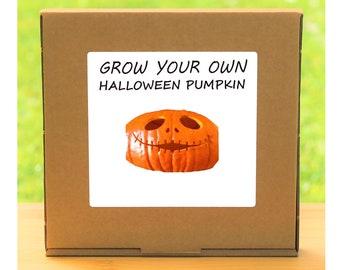 Unusual Windowsill Gardening Gift - Grow Your Own Halloween Giant Pumpkin Plant Kit
