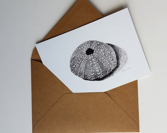 Sea urchin shell, print of a pen- and inkdrawing, double card with envelope
