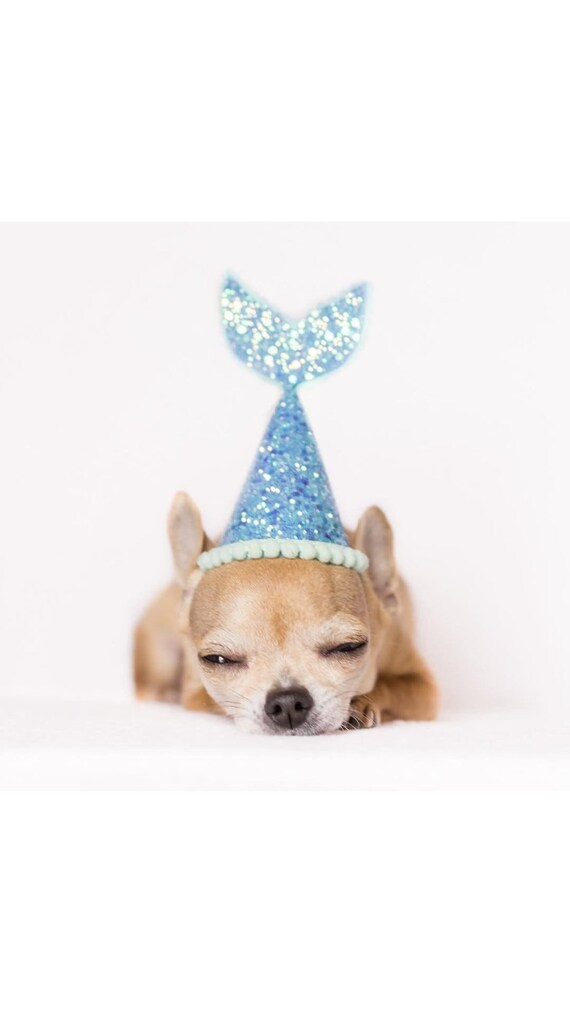 Dog Birthday || Dog Party Hat || Dog Birthday Party Hat || Pet Party Decor || Animal Party Hat || Dog Gift || Dog Clothes