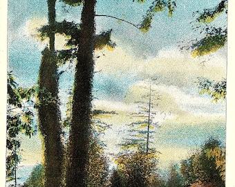 Seattle, Washington, Kinnear Park - Vintage Postcard - Postcard - Unused (Y)