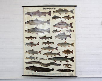 "Large German Educational Chart Circa 1930s ""Fishes"""
