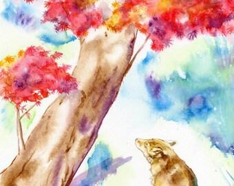 Fox under Maple Tree