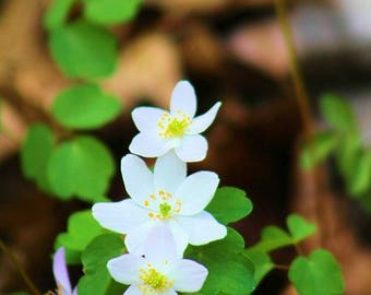 3 white flowers