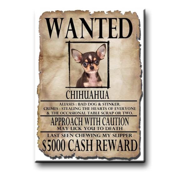 Chihuahua Wanted Poster Fridge Magnet No 3
