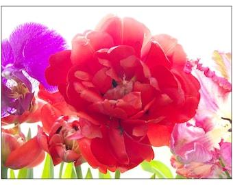 Red Tulip Photograph,  Flower Photography, Vivid, Bright, Romantic, Neon Color