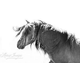 Sable Island Stallion's Mane -Fine Art Horse Photograph - Horse - Sable Island - Wild Horse - Black and White -Fine Art Print