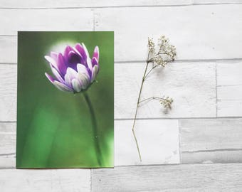 Flower photo card | birthday card | photo print | card for her  | card for gardener | purple flower | sympathy card | nature photo | easter
