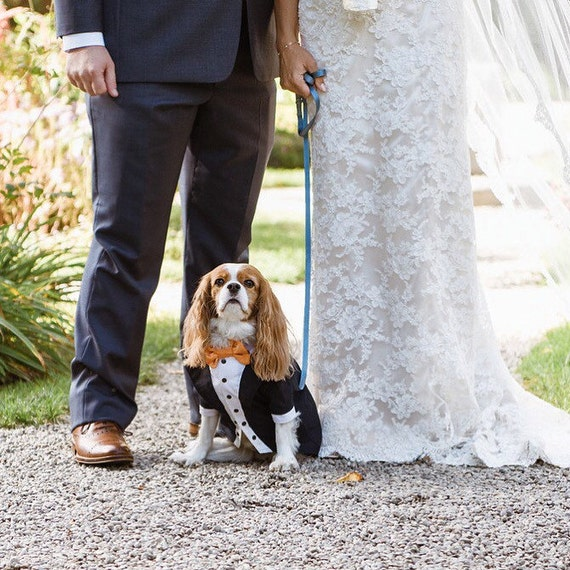 Navy blue wedding dog tux Custom made dog wedding attire Dog