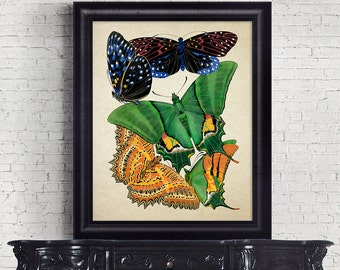 Antique Botanical Print Wall Art Print Butterflies Insects Giclee Vintage Home Decor Natural History Print Art Decorative Reproduction BF003