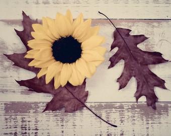 Fallen - Fine Art Photograph - yellow sunflower brown leaves wood table still life nature home decor print
