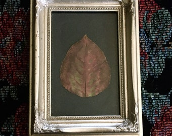 Minimally Ornate Leaf Frame