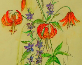 West Virginia Wildflower in Pastel and Ink: Turk's Cap Lily
