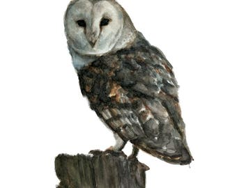 Watercolor Barn Owl Print, Barn Owl Art Print