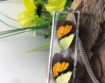 Real Butterfly Necklace, Real Butterfly Pendant, Butterfly Pendant, Insect Jewelry, Birthday Gift, Bridesmaid Gift, Butterfly Necklace