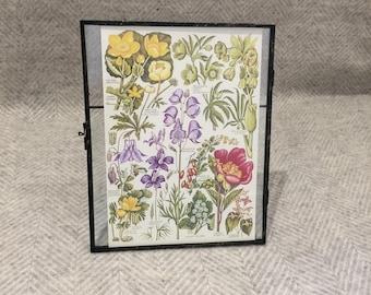 Vintage framed botanical drawing, vintage botanical flower illustrations, botanical prints, floral, in glass frame, pink purple