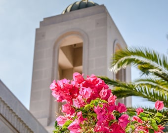 Pink Blossoms at Newport Beach LDS Temple