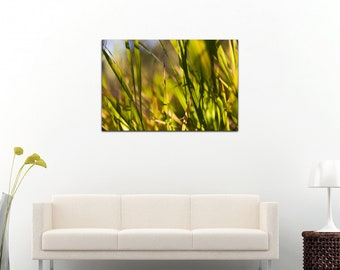Grass Close up photography on photo canvas, spring time, background image, bokeh, blur, green, 8x12, 16x24, 24x36