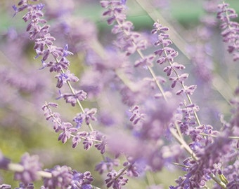Purple flower photography,  Soft lavender, summer flower photography  home decor