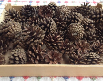 50 pcs,Natural Lovely Small Pine Cones For Your Craft and Decoration Ideas