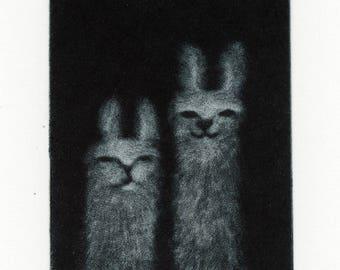 Llamas, Mezzotint engraving