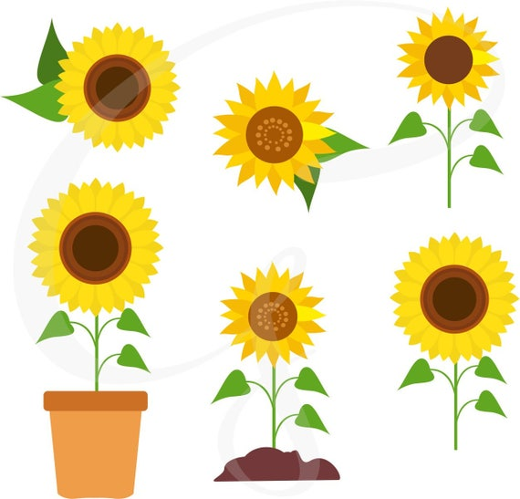 sunflower clipart sunflower vector sunflowers flower rh etsy com sunflower clipart in microsoft word sunflower clipart in microsoft word