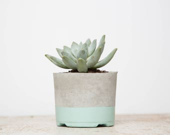 Mother's Day Gift for Her, Large Concrete Planter, Mint