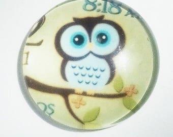 lovely blue OWL on Green 20mm