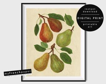 Digital Botanical Fruit Print Pear Print, Botanical Print Vintage Botanical Printable Botanical Art Prints Printable, Botanical Illustration