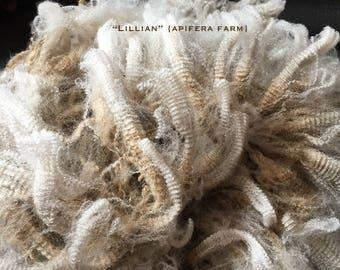 Raw UNWASHED Wool: Lillian a CVM Romeldale