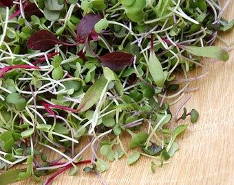 5,000+ Microgreens Seeds- Red Russian Kale