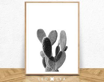 Cactus Print, Black and White Plant, Modern Minimalist Printable Wall Art, Black and White Nature Photography, Large Print Decor, Botanical