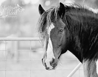 Gypsy Horse Photography - Horse Photography Print - Fine Art Wall Hanging - Horse Decor - Equine Art - Rustic Decor - Equine Photo
