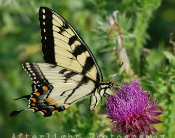Butterfly Photography, Nature Photography, Butterfly Art, Nature Print, Butterfly,
