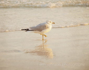 bird photography, beach home decor, seagull photography, reflection, beach cottage art, white home decor, ocean photography no 1