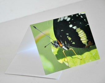Photo Note Card Black Butterfly on Green Leaf Photography Blank Card