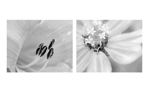 Black and white floral wall prints grey photography set 2