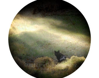 Black Cat Photograph, Wall Decor, Surreal Photo, Animal Picture, Nature, Landscape, Round Image on an 8x10 inch Print -The Witching Hour
