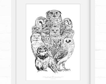 Owls Owls Owls | Art Print | Home Decor | Wall Art | Wall Decor | Giclée Print | Owl Lover | Owl Art | Owl Poster |  Owl Art Print
