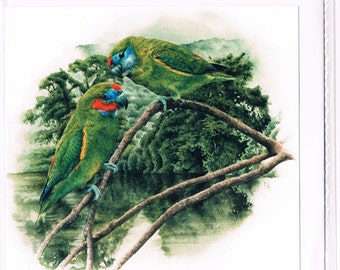 Double-eyed Fig-parrots Square Greeting Card