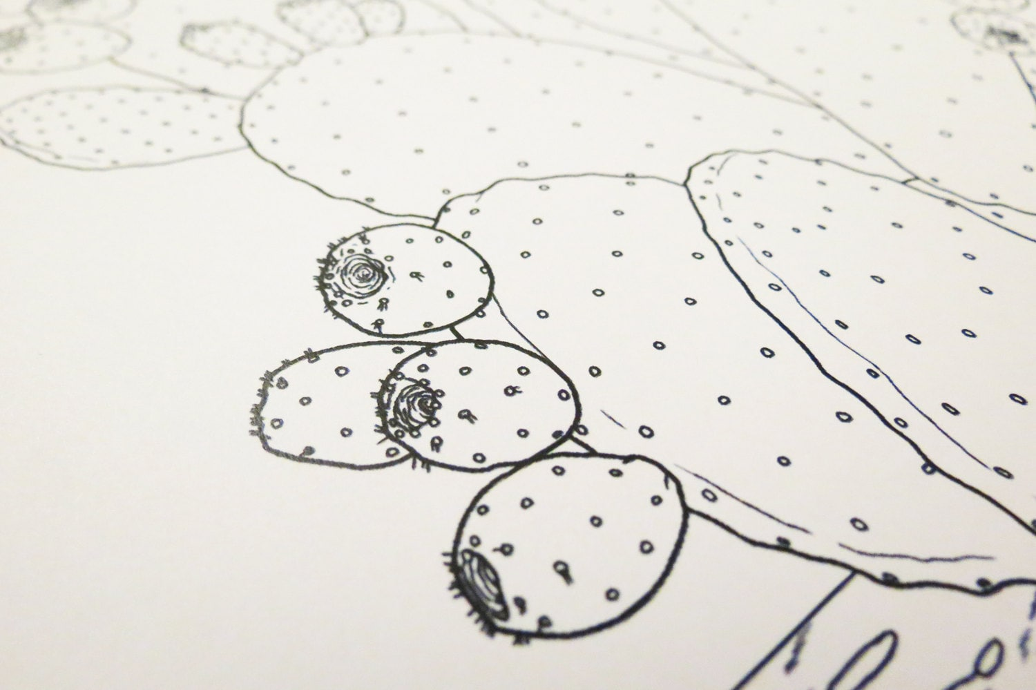 prickly pear cactus coloring page digital download pdf