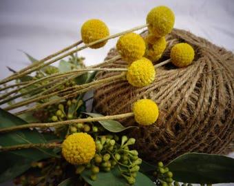Yellow flowers etsy dried craspedia mightylinksfo