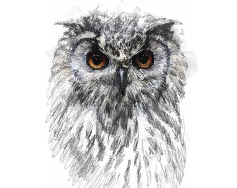 Owl sketch | Limited edition fine art print from original drawing. Free shipping.