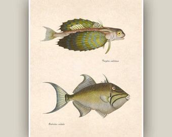 Fishes Print, Sea creatures, Vintage illustrations,  Seashore art  Print, Coastal Living, cottage chic, Beach cottage decor, 10x8