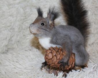 Grey Squirrel - Taxidermy Animal - Ready to ship  - Gifts - Weird taxidermy - Ethical taxidermy - Taxidermy - Squirrel Taxidermy
