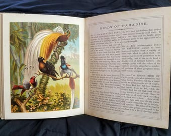 Pictures & Stories from Natural History (1886) illustrated children's book, color lithography