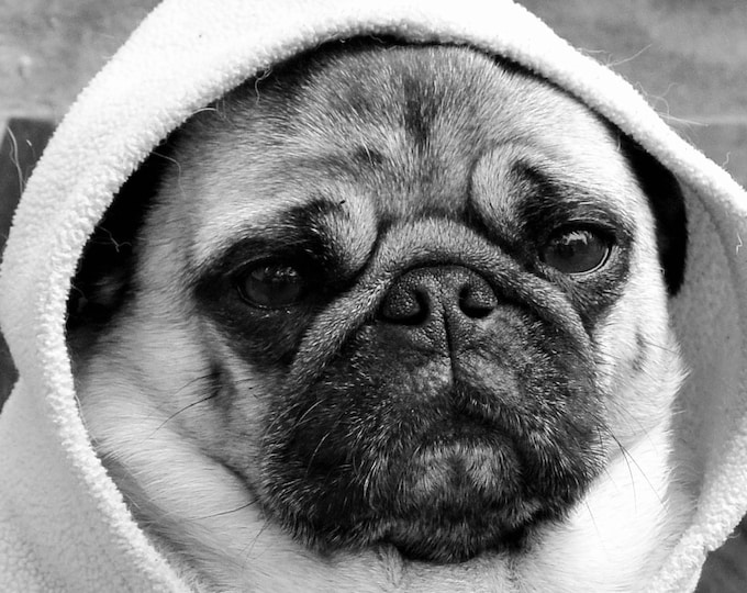 "Custom Little Pug Playin"" Hood"