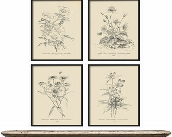 Botanical Print Set of 4 - Botanical Vintage Prints, Antique Botanical Print Set, Vintage Botanical Prints - Rustic Decor - Home Decor Art